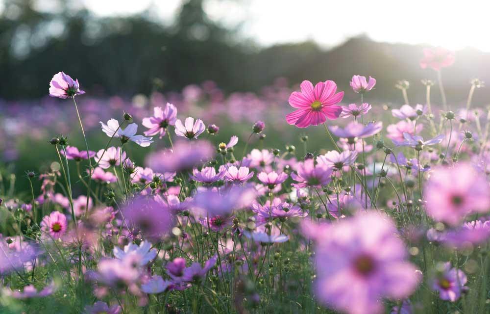 Cómo cuidar las plantas en primavera