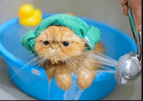 ¿Con qué jabón puedo bañar a un gato?
